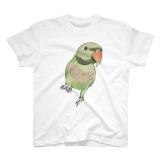 まめるりはことりのご機嫌なダルマインコちゃん【まめるりはことり】 T-shirts