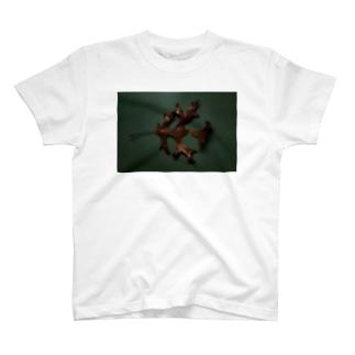 dry leaf T-shirts