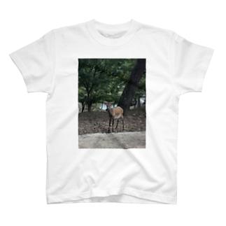 奈良公園の鹿さん T-shirts