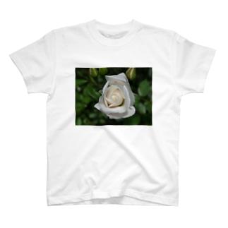 白薔薇 T-shirts