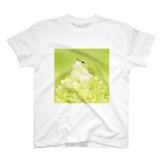 Celery〜イイジマムシクイ T-shirts