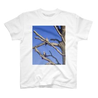 鳩 T-shirts