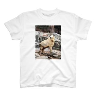 ゴールデンターキン T-shirts
