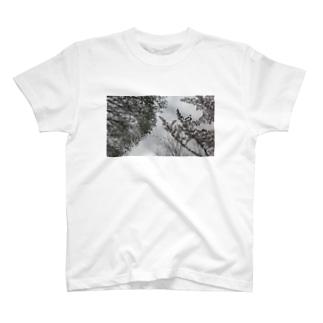 fp_48_Photo T-shirts