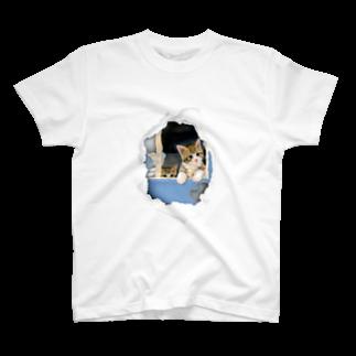 萌獣ファクトリーの子猫 絵:SECRET BASE ~ぼくたちのひみつきち~ T-shirts