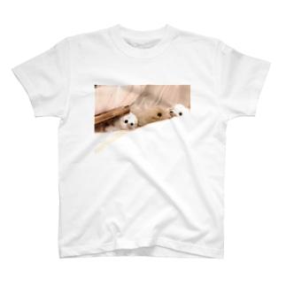 フォトスタンドクミン T-shirts