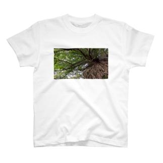 岩と木 T-shirts