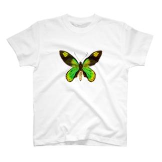 ビクトリアトリバネアゲハ T-shirts