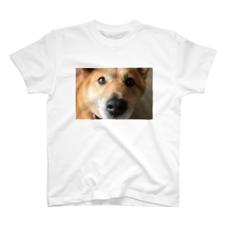 Bow-wow crush T-shirts