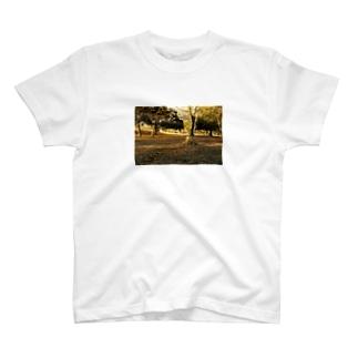 切り株Tシャツ T-shirts