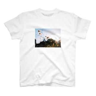 オーソドックスTシャツ T-shirts