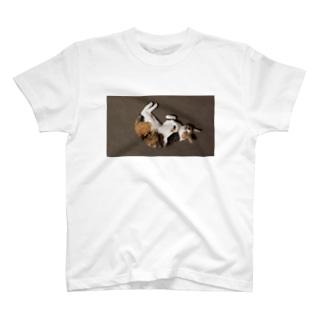 何かを待っている猫 T-shirts