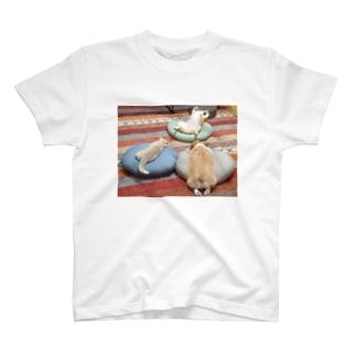 あやしい儀式をする犬と猫 T-shirts