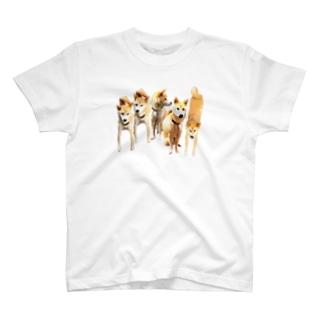 柴犬集合 T-shirts