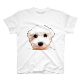 犬(マルチーズ)の正面 T-shirts