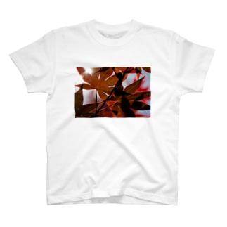 影模様 T-shirts