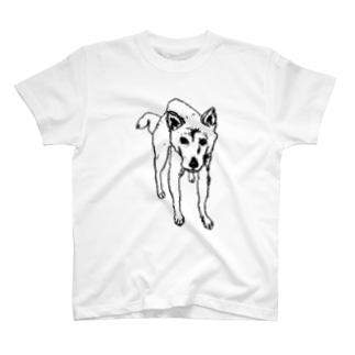 柴犬『まなざし』 T-shirts