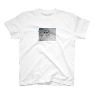 センダンTシャツ T-shirts