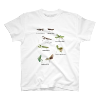 関東のカマキリ(背景白色ver) T-shirts
