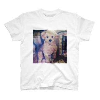 切ないココ T-shirts