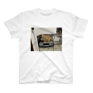 JIRO THE GINGER CAT T-shirts