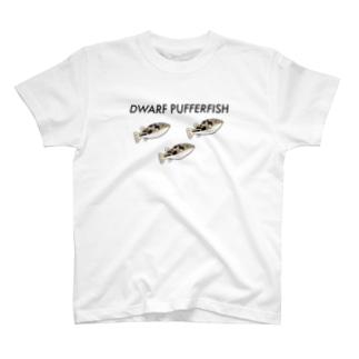 【AQUA】アベニーパファー群泳 T-shirts