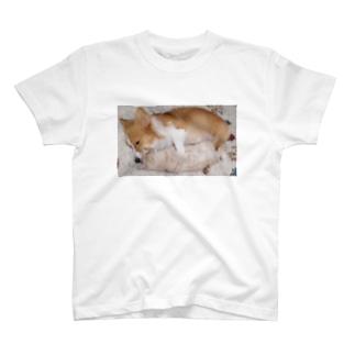 犬と猫だっこ T-shirts