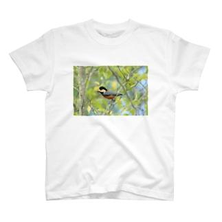ヤマガラ T-shirts