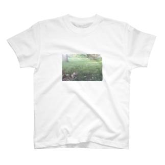 squirrel  T-shirts