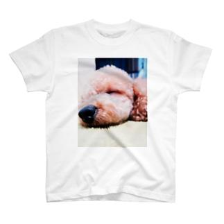 トイ・プードル 寝顔 T-shirts