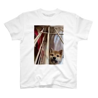 柴犬がのぞき込むとき… T-shirts