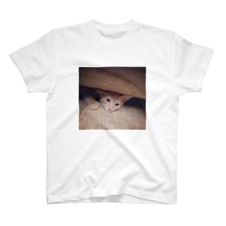 仔猫ごま T-Shirt