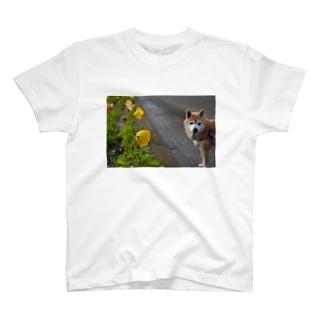 hana T-shirts