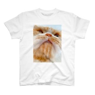 ドカン T-shirts