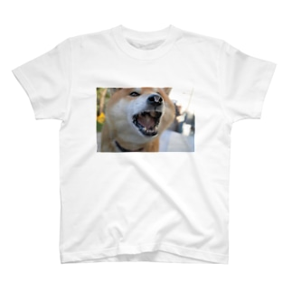 柴犬の暴食後 T-shirts