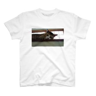 Spoil cat T-shirts