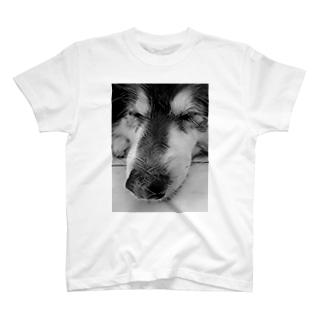 眠る犬1(タイ) T-shirts