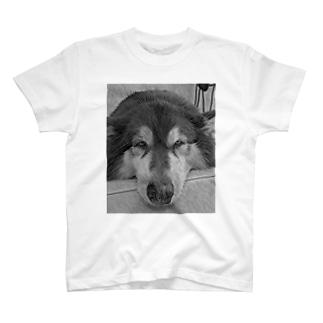 見据える犬(タイ) T-shirts