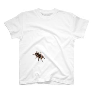 クモシリーズ T-shirts
