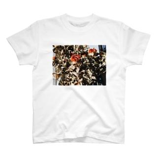 Beni flower T-shirts