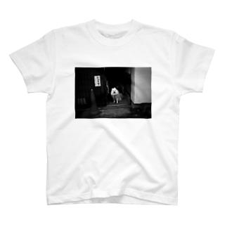 かみますわんこ T-shirts