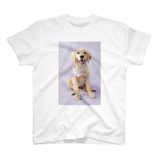 ゴールデンレトリバーCoeurクールグッズ T-shirts