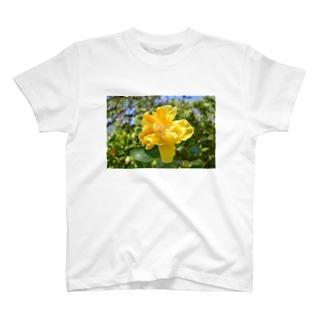 聖地に咲くハイビスカス(黄) T-shirts
