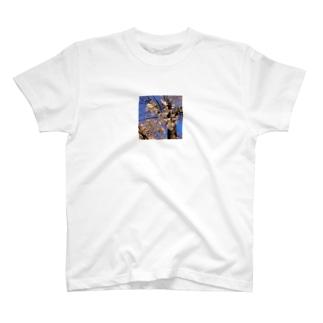 さく T-shirts