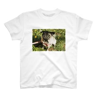 春を感じるそらくん T-shirts