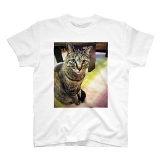 わたしのねこ T-shirts