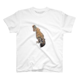 トーマストゲオアガマ/しがみつき T-shirts