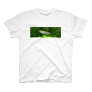 夜桜 T-Shirt