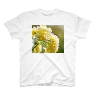 木香薔薇 春 T-Shirt