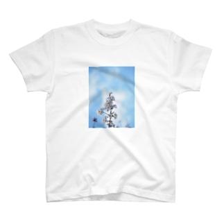 sakura 1 T-shirts
